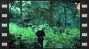 Geralt se enfrenta a hombres lobo en un nuevo avance de The Witcher III: Wild Hunt